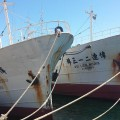 Fishing vessels for auction.jpg
